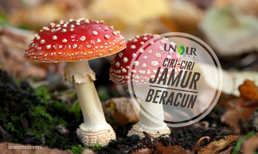 Ciri-Ciri Jamur Beracun (Tidak Boleh Dikonsumsi)   Unsurtani.com