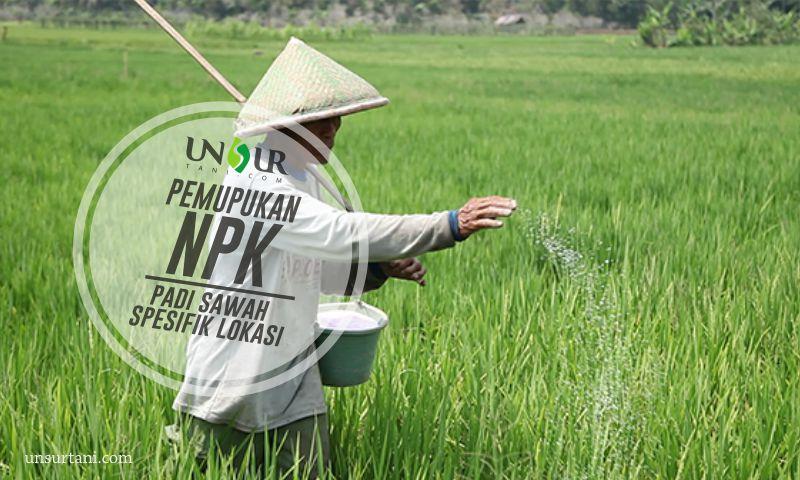 Rekomendasi Pemupukan Npk Padi Sawah Spesifik Lokasi Unsurtani Com