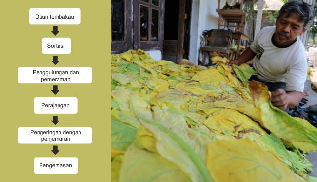 Httpsunsurtani201701jenis jenis jamur yang bisa dikonsumsi diagram alir pengolahan tembakau rajangang ccuart Image collections